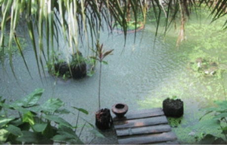 CHIANG MAI BANH HOME_6